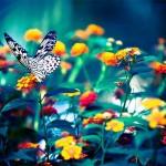 Çiçek- Kelebek ve çiçekler (2)