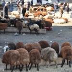 Kurbanlık Hayvanın Özellikleri ve Etinin Dağıtımı