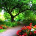 Manzara- Ağaç altı güzelliği (2)