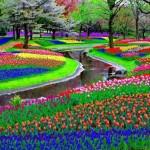Sümbül bahçeleri