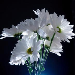 beyaz çiçek